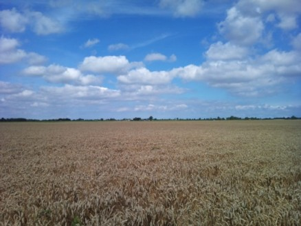 The endless skies of the north: grain fields near Beerta. Photo by XPeria2Day, licensed under Creative Commons